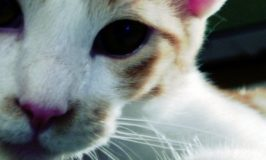 Felini my Cat