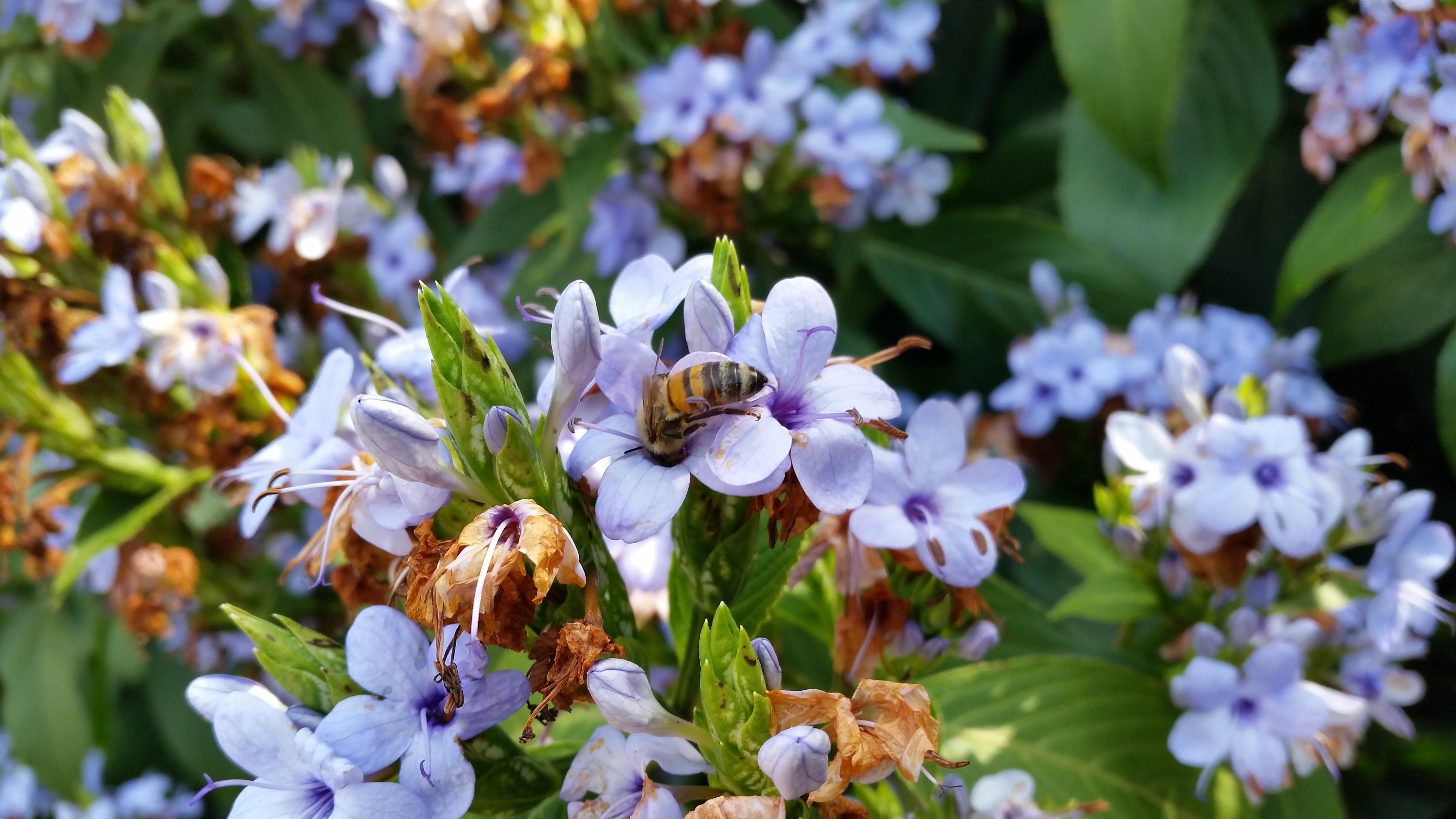 A Bee in a Bush
